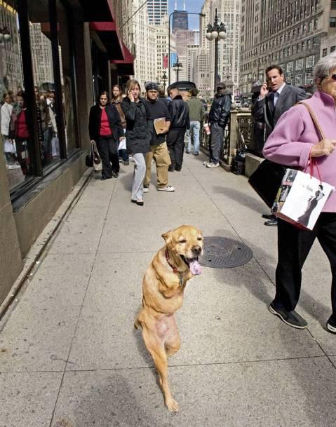 Two-legged dog Faith