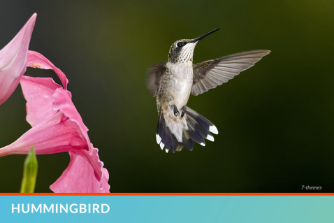F261_FFF_June_HummingBird_R2